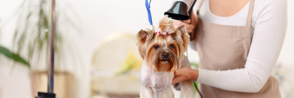 Phoenix Pet-Friendly Guide - Pet-Friendly Services - Heers