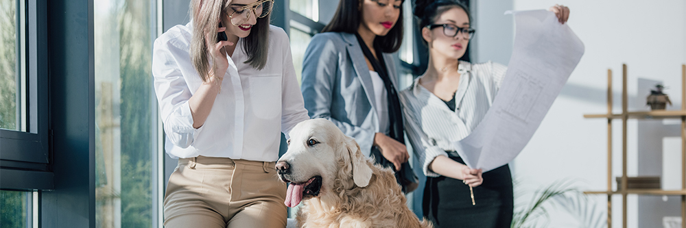 Phoenix Pet-Friendly Guide - Pet-Friendly Businesses - Heers