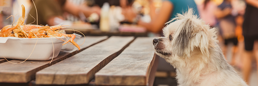 Phoenix Pet-Friendly Guide - Pet-Friendly Restaurants - Heers